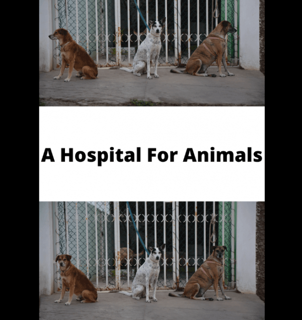 A Hospital For Animals